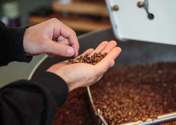 Inspección de granos de café en Onibus Coffee el 20 de mayo de 2016 en Tokio, Japón.