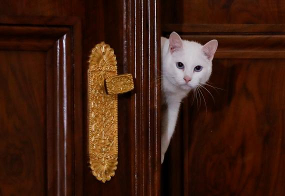 Un gato asomándose por una puerta