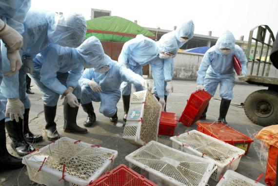 Inspectores revisan civetas y otros animales salvajes en China.