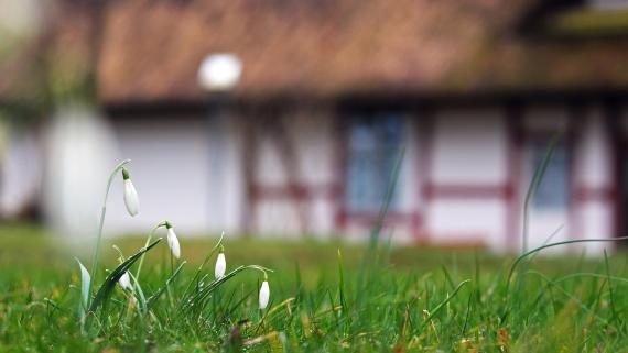 Jardín de casa