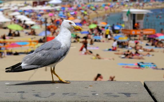 Una gaviota en una playa de España.