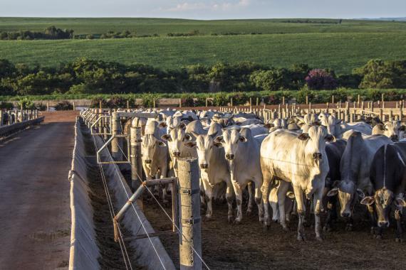 vacas, ganadería, granja