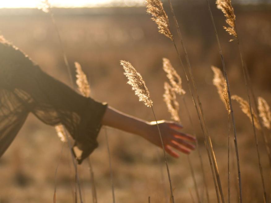 Persona tocando trigo en el campo