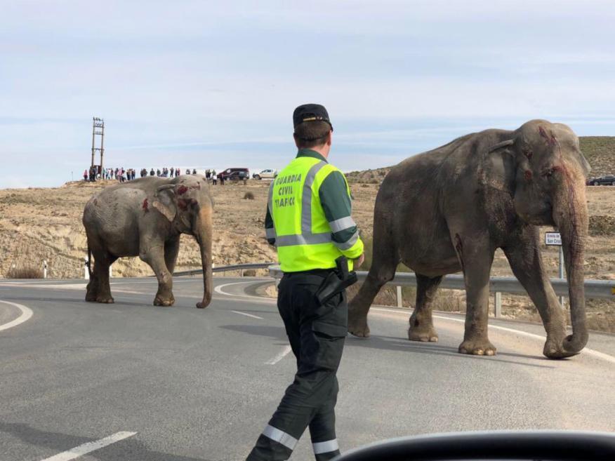 accidente con elefantes autopista a30