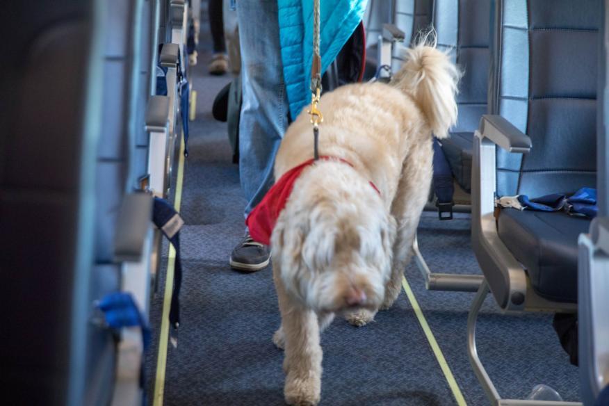 Perro en el avión