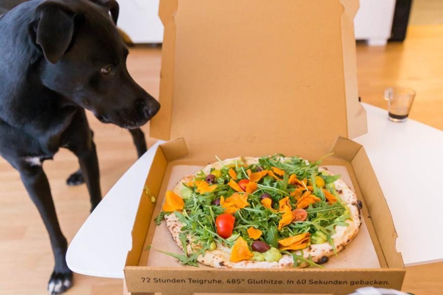 Perro, pizza, vegano