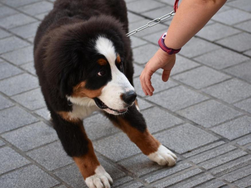 A veces, puedes no gustarle a tu perro o hacerle sentir incómodo.