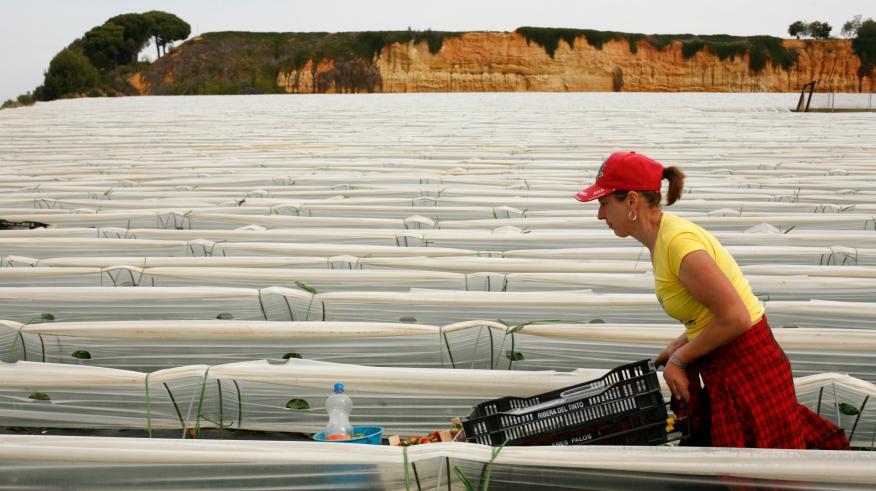 Una agricultora trabaja en un invernadero en Palos de la Frontera (Huelva)