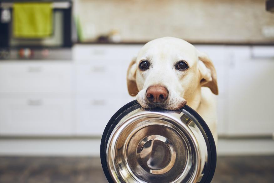 Comida perro