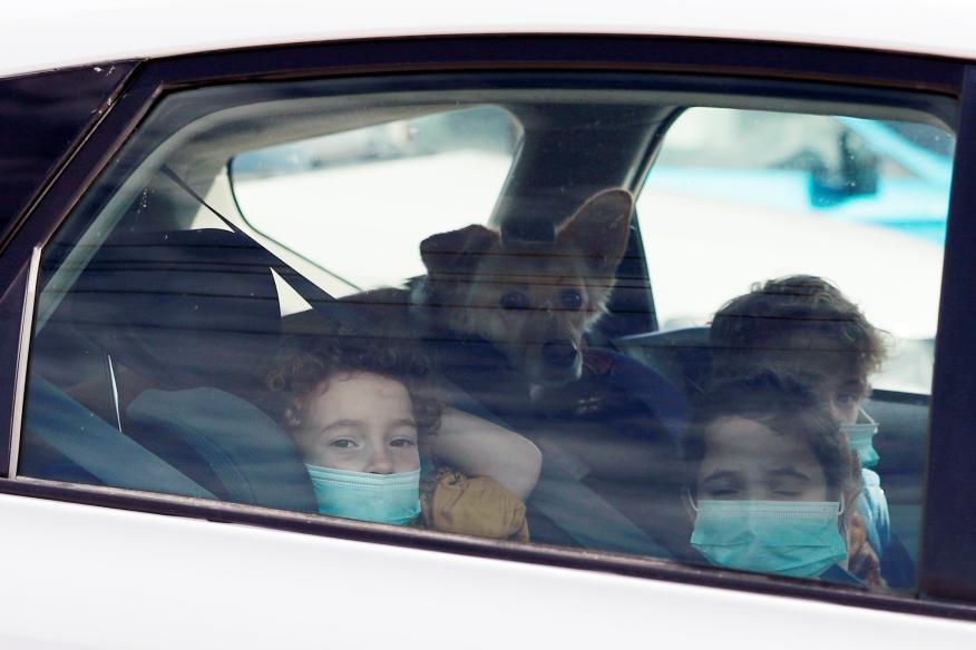 coronavirus niños, mascotas