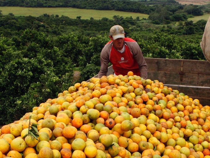 No, ni todas estas naranjas ayudarán a prevenir el coronavirus u otras enfermedades infecciosas