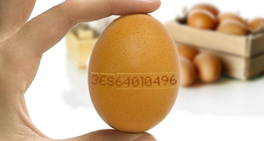 Código del huevo