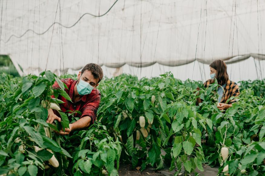 Ha aumentado la creación de empresas agrícolas (gettyimages)